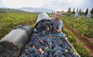«Granada puede competir en el sector del vino en calidad, pero no en cantidad»