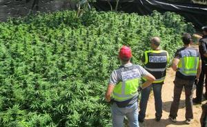 Descubren cinco invernaderos de marihuana con 1.300 plantas en Chauchina y Atarfe (Granada)