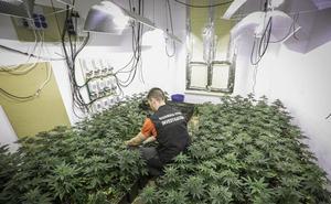 La Guardia Civil se incauta de más de 8.500 plantas de marihuana en Granada en el mes de octubre