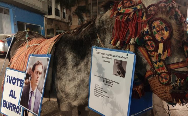 Curiosa protesta en burro por las calles de Motril