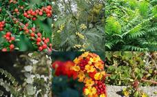 Estas son algunas plantas invasoras de las que se alerta su presencia en viveros