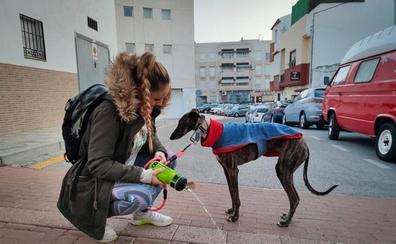El Ayuntamiento de Motril anima a los dueños de los perros a que echen agua en sus orines para eliminarlos de las calles