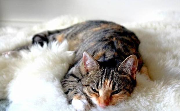 mi gato tiene una infección ocular, ¿qué puedo hacer?
