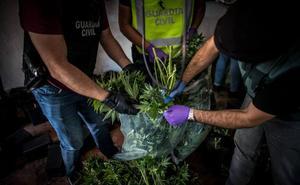 Marihuana SA: un negocio sin fronteras