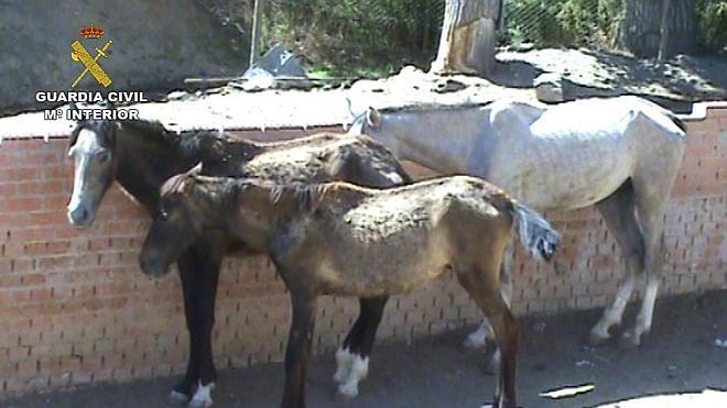 Detenido por maltrato animal tras hallar en su finca nueve caballos muertos
