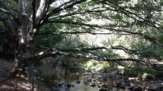Un bosque de cuento
