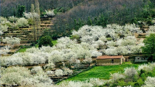 El florecer del Valle del Jerte
