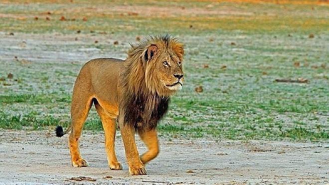 El cazador que mató al león Cecil sería norteamericano, no español