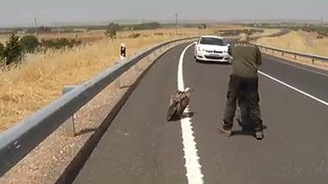 Se baja del coche y salva la vida de un buitre leonado en plena autovía