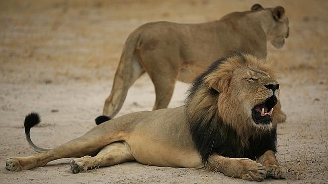Animales que remueven conciencias