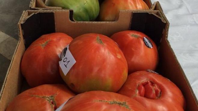 Pagan 1.200 euros por un lote de tomates en una subasta en Málaga