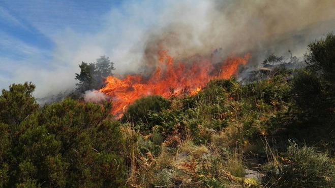 El fuego del Jerte ha quemado unas 900 hectáreas