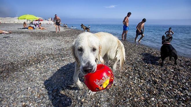 Piden zonas para perros en las playas