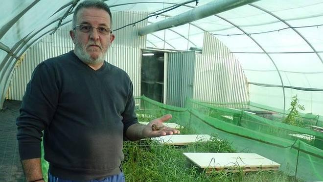 Caracoles de Serón, la primera granja con producción de la provincia