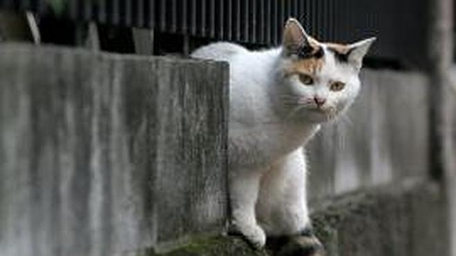 Un vecino graba los maltratos de un dueño hacia su gata