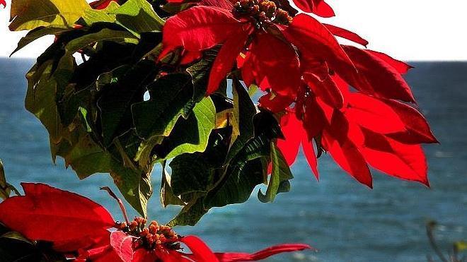 Flores rojas sobre el mar