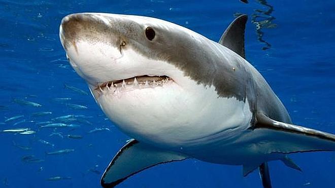 Un turista alemán muere atacado por un tiburón en Egipto