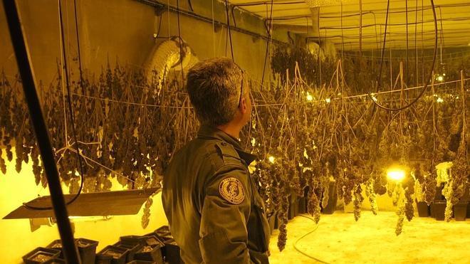 Imputado por ocultar 673 plantas de cannabis en un aljibe