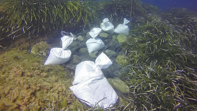 La Junta ensaya un método de sombreado para erradicar un alga invasora en el Cabo de Gata