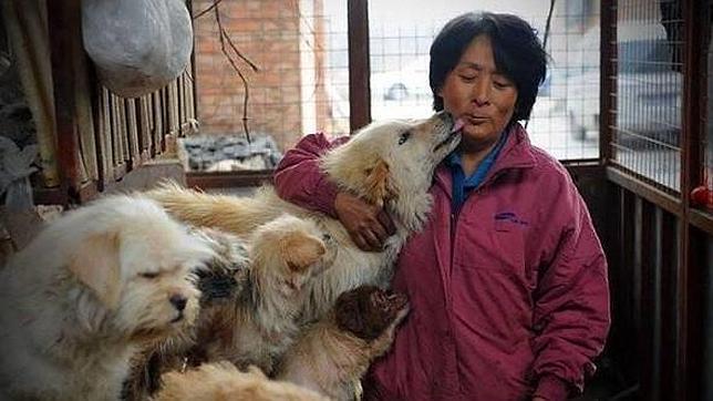 Una china dedica su vida y su dinero a rescatar perros de las carnicerías