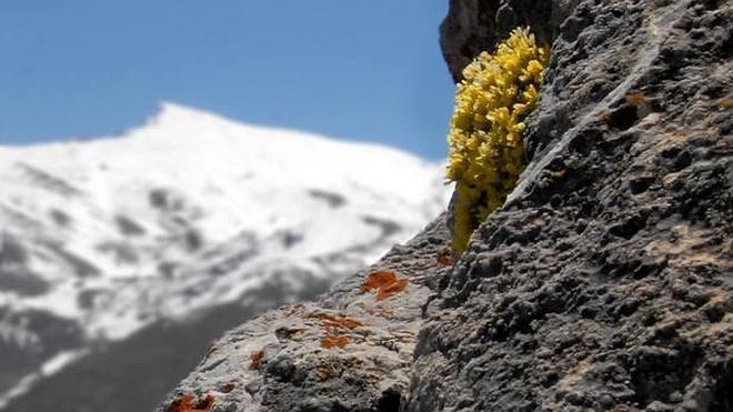 La frontera de las altas cumbres