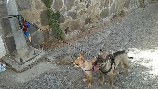 140.000 perros y gatos fueron abandonados en España en 2014
