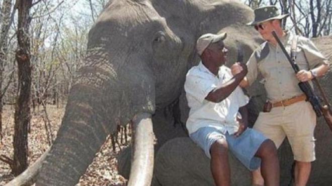 Un cazador alemán paga 54.000 euros para matar a uno de los mayores elefantes de África