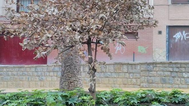 En la Alameda faltan nueve árboles grandes tras las obras, según GEA