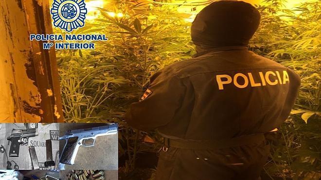Detenidas 14 personas y desmanteladas 19 plantaciones de marihuana