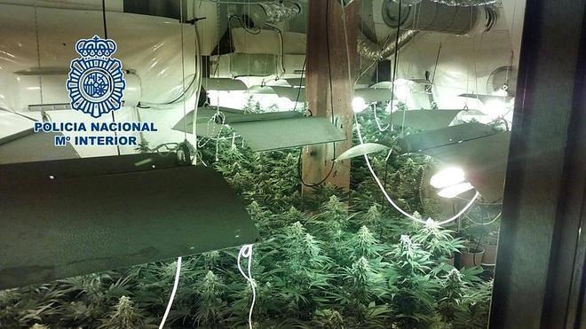 Cinco detenidos por cultivar más de 200 plantas de marihuana en una vivienda