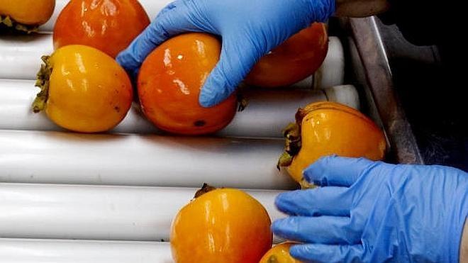 ¿Por qué hay tantos caquis en la frutería?