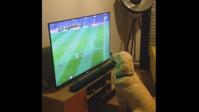 Este perro no pierde detalle de la Eurocopa
