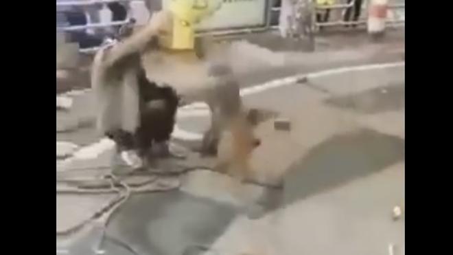 Un mono ataca a un adiestrador con un cuchillo de carnicero