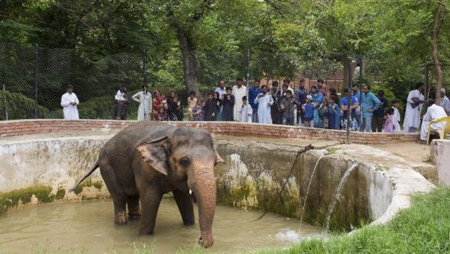 La depresión del elefante Kaavan moviliza a todo el mundo