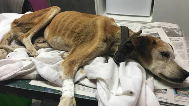 Buscan hogar para este perro abandonado que lleva dos meses sin comer