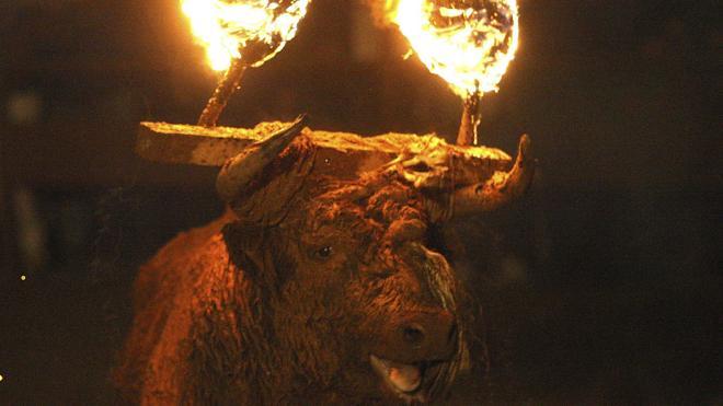¿El último Toro de Medinaceli?