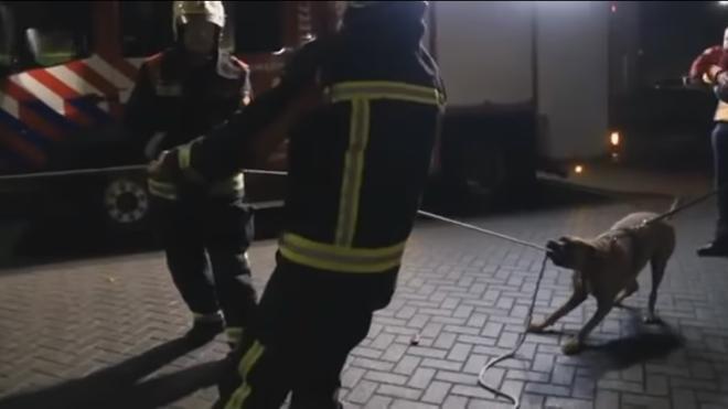 El perro que ayudó a los bomberos a derribar un árbol