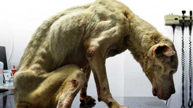 El maltrato animal sienta en el banquillo en un año a una veintena de personas por casos graves