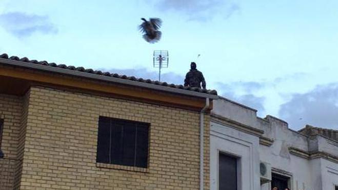 PACMA denuncia el lanzamiento de la pava en Cazalilla
