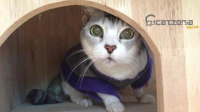 Abre un hotel 5 estrellas sólo para gatos (con mimos incluidos)