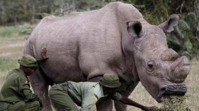 Un rinoceronte mata a un científico que trabajaba en la conservación de este animal